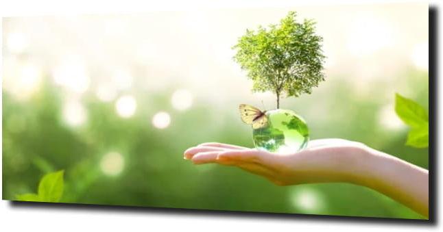 obraz na szkle Motyl zieleń drzewa