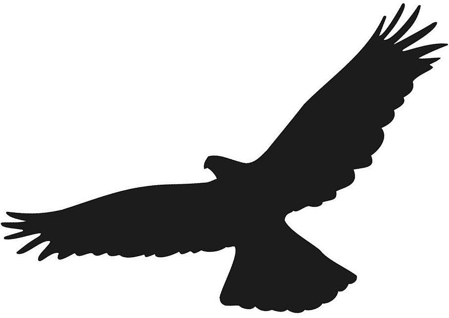 Naklejki na szyby, ptak drapieżny wzór 02.