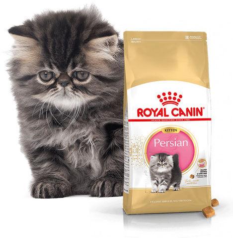 ROYAL CANIN Persian Kitten 10kg karma sucha dla kociąt do 12 miesiąca życia rasy perskiej