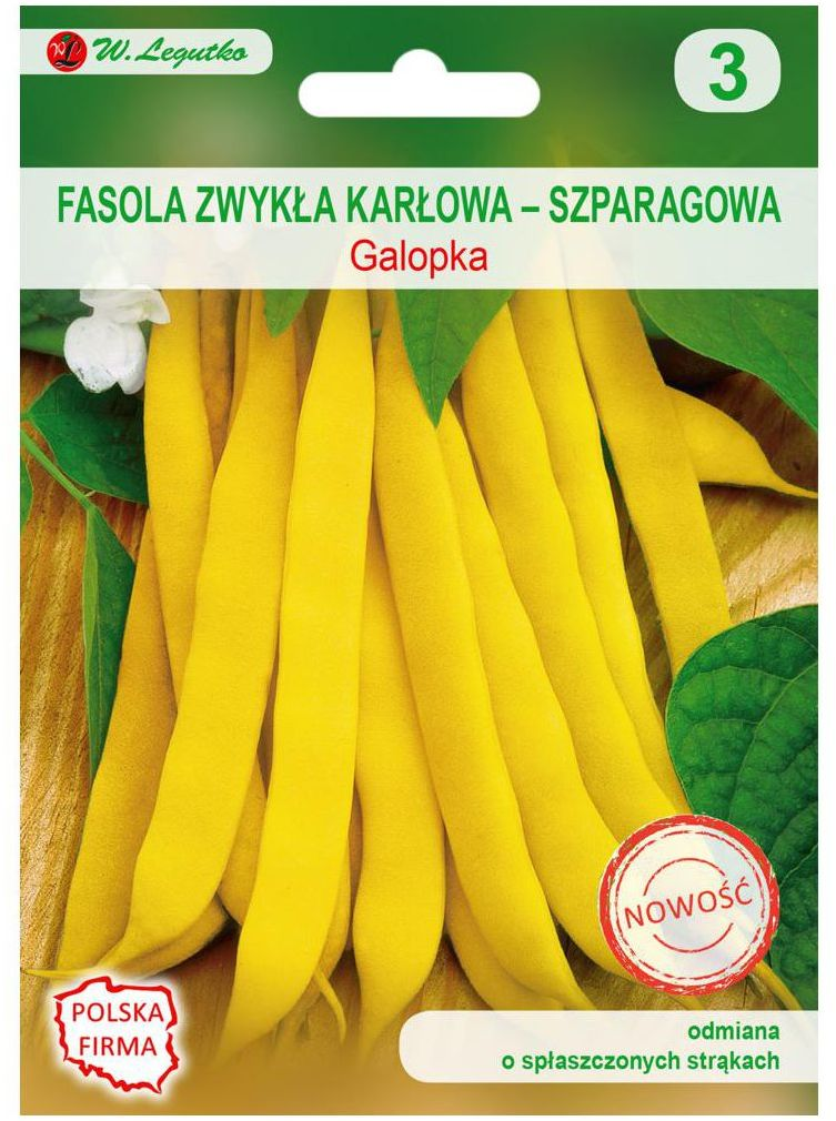 Fasola zwykła karłowa GALOPKA nasiona tradycyjne 35 g W. LEGUTKO