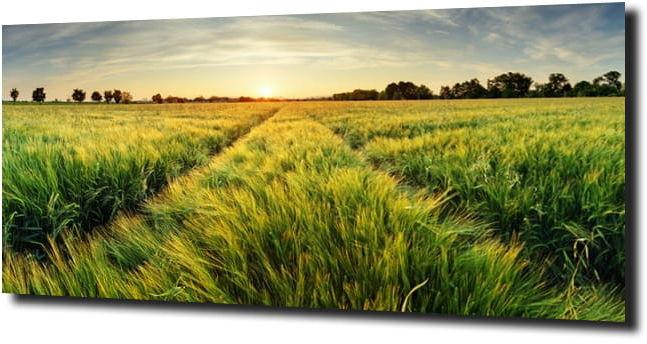 obraz na szkle Zielona łąka trawa