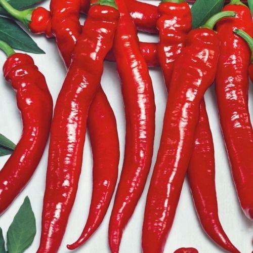 Papryka pepperoni ''shakira'' f1  kiepenkerl