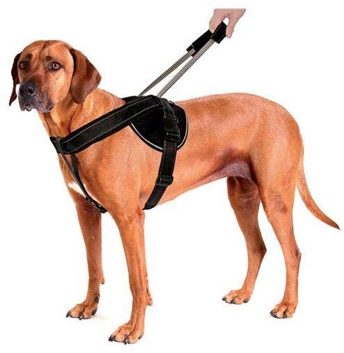 Szelki Patento Pet Jockey