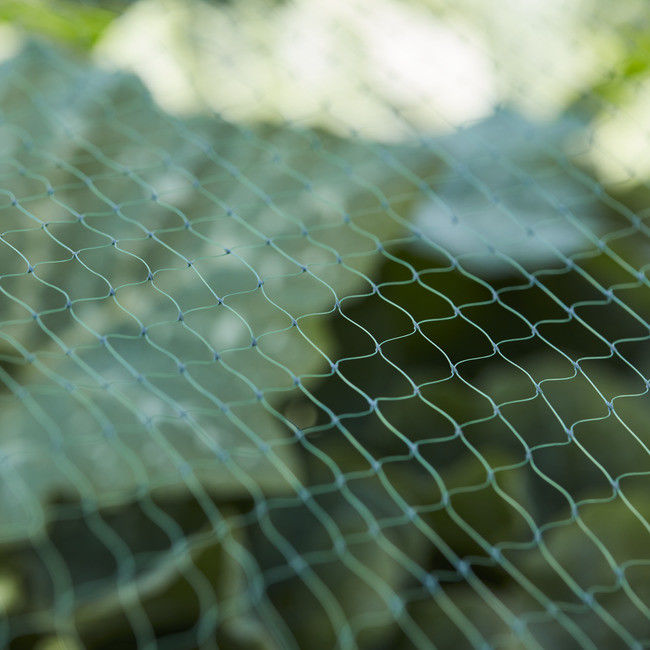Siatka przeciw ptakom Verve 2 x 10 m