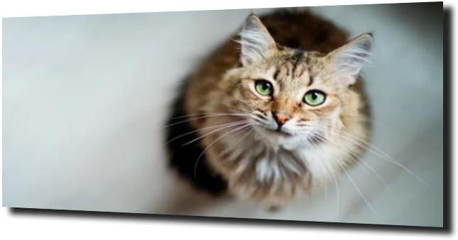 obraz na szkle Kotek zielone oczy