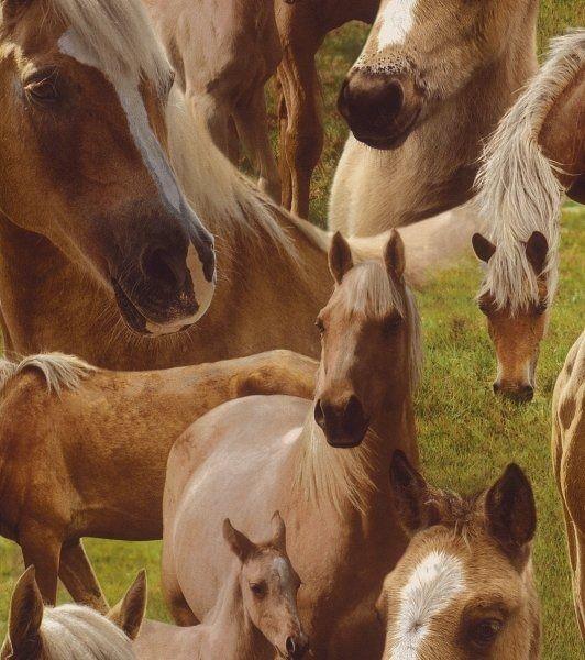 Tapeta konie 293104 kids&teens ii