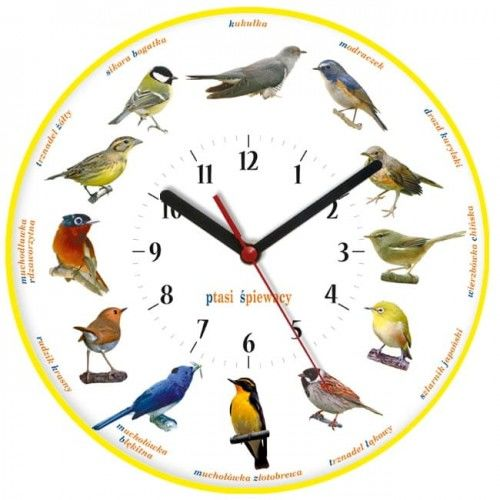 Zegar ścienny obrazki /ptaszki