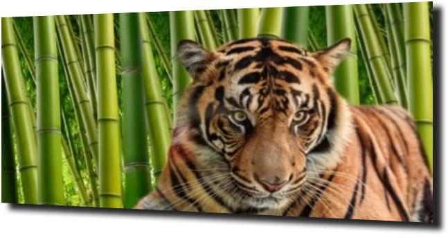 obraz na szkle Tygrys bambus XL