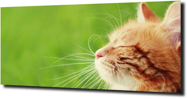 obraz na szkle Kot kotek zieleń