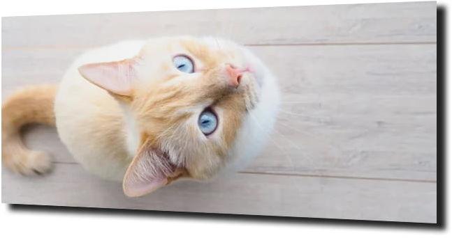 obraz na szkle Kot kotek drewno 125X50