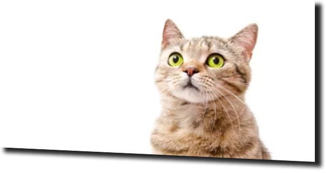 obraz na szkle Kot zielone oczy
