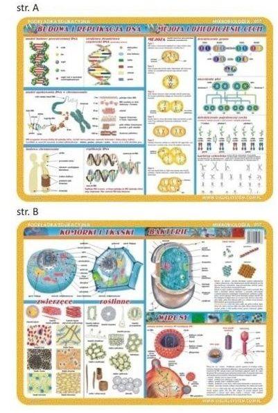 Podkładka edu. 057 - Budowa i replikacje DNA...