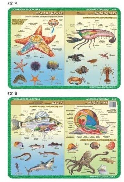 Podkładka edu. 054 - Anatomia: szkarłupnie..