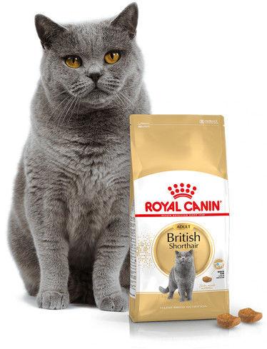 ROYAL CANIN British Shorthair 2kg + 12x British Shorthair Adult saszetka 85g (Sos)