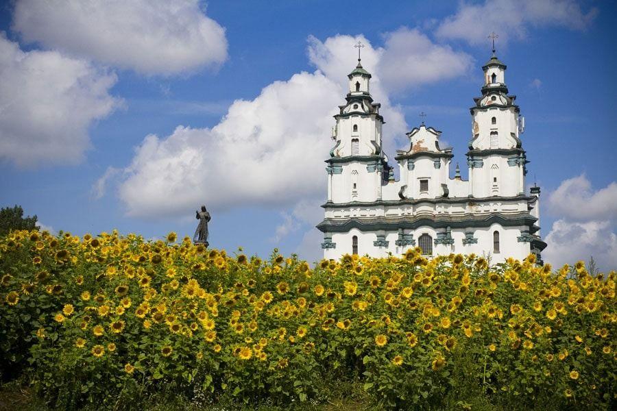 Słoneczniki pod kościołem, białystok - plakat premium wymiar do wyboru: 42x29,7 cm
