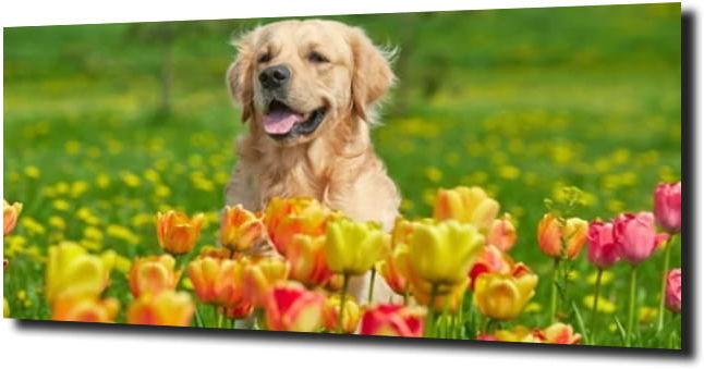 obraz na szkle Pies i tulipany 120X60
