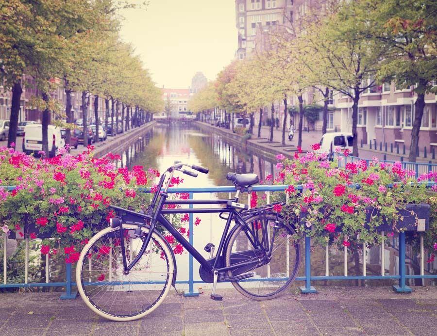 Amsterdam wiosną rower wśród kwiatów - plakat wymiar do wyboru: 70x50 cm