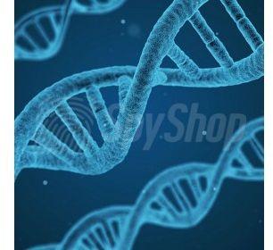Test DNA na ustalenie ojcostwa w 8 tygodniu ciąży
