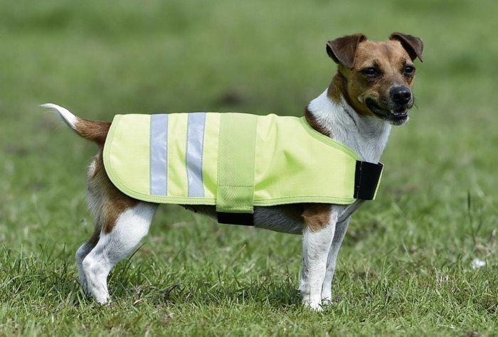 Odblaskowa derka dla psa - Busse
