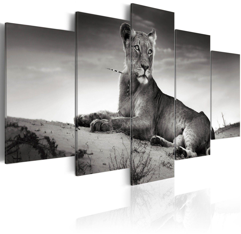 Obraz - lwica na pustyni