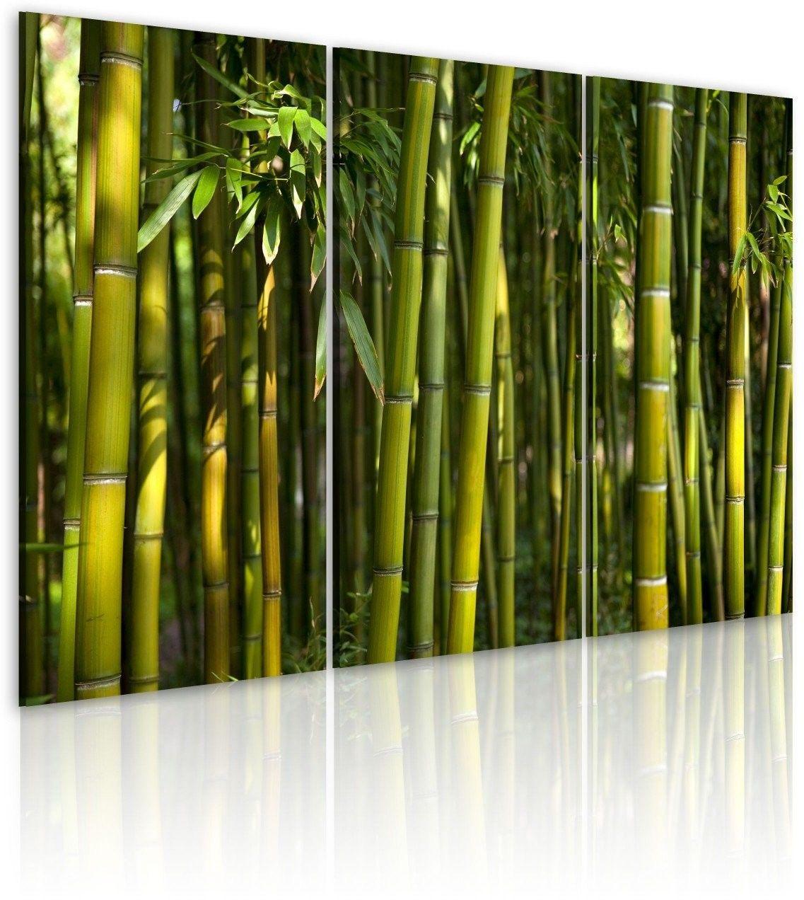 Obraz - bambus i zieleń