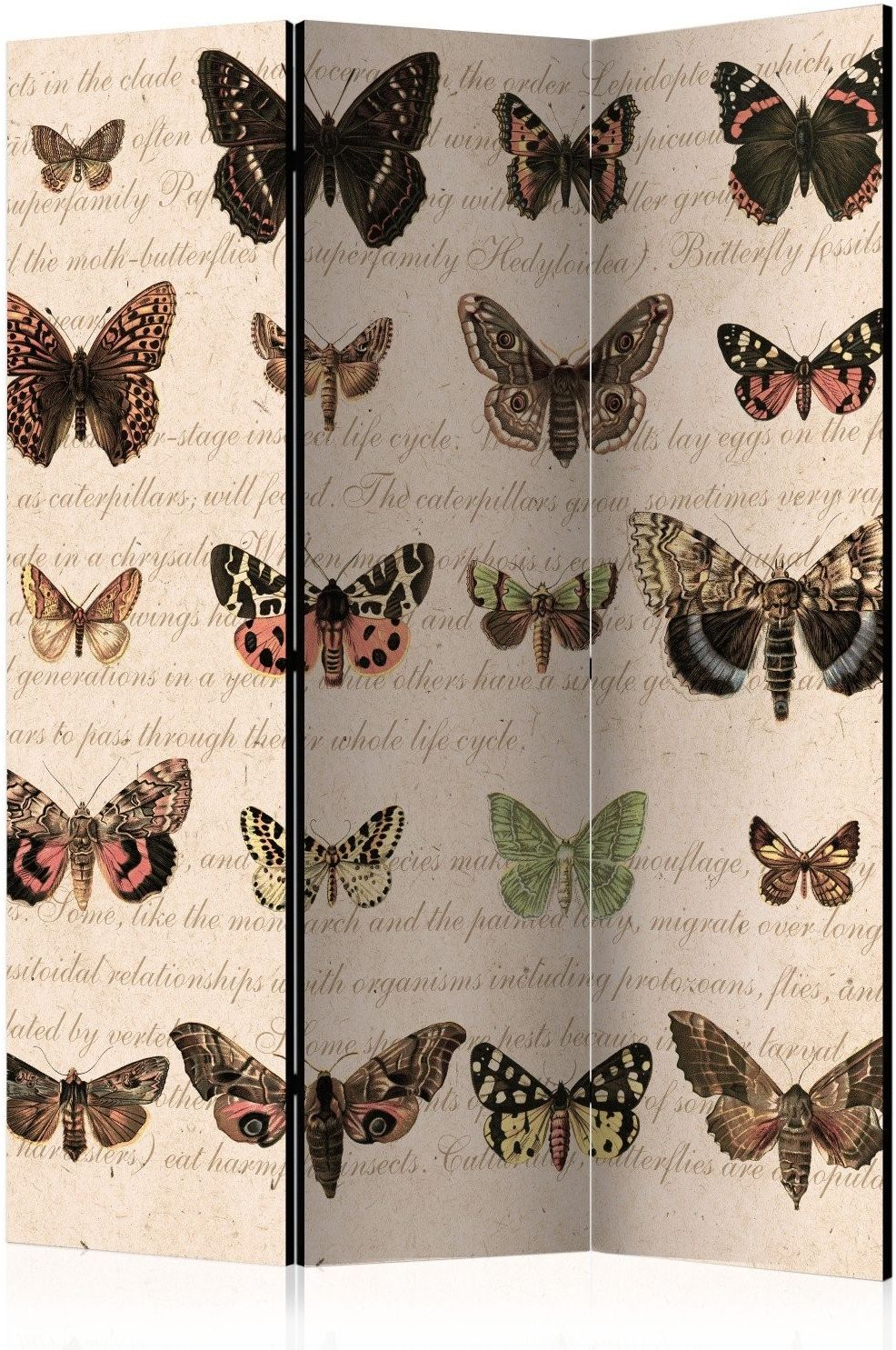 Parawan 3-częściowy - styl retro: motyle [room dividers]