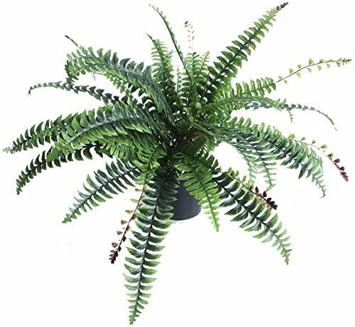 Liść Sztuczna roślina Czarny plastikowy wzór doniczki UK, 60 cm paproć, Boston krzaczaste
