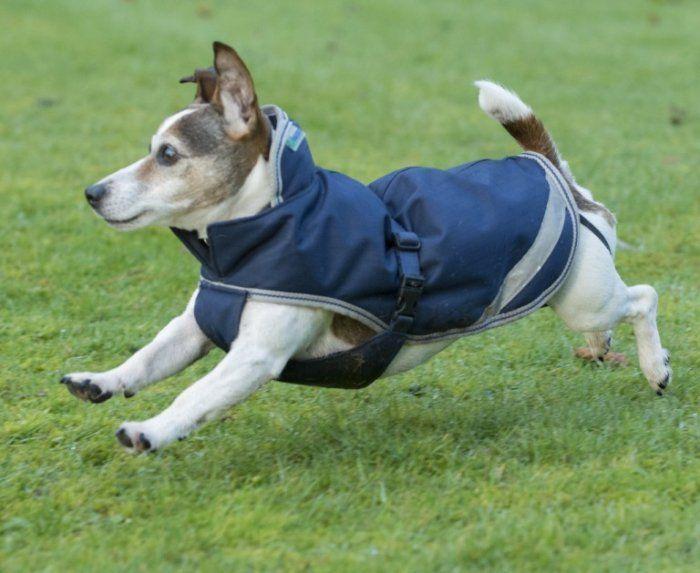 Derka dla psa 50g FREEDOM - Bucas - navy/silver