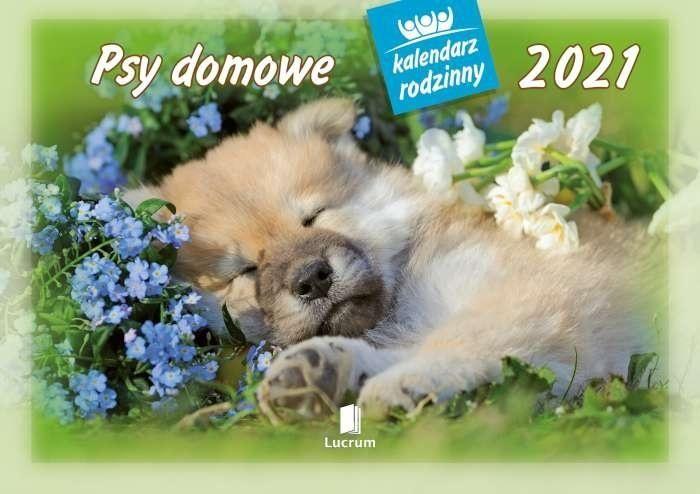 Kalendarz 2021 WL08 Psy domowe Kalendarz rodzinny 5 sztuk ZAKŁADKA DO KSIĄŻEK GRATIS DO KAŻDEGO ZAMÓWIENIA