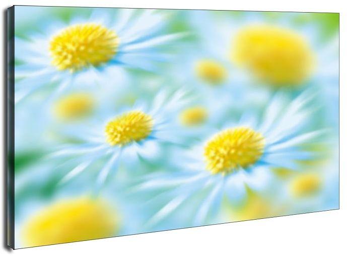 Stokrotki - obraz na płótnie wymiar do wyboru: 80x60 cm