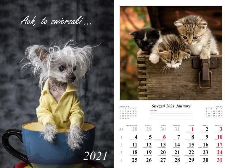 Kalendarz 2021 Ach, te zwierzak13 planszowy ZAKŁADKA DO KSIĄŻEK GRATIS DO KAŻDEGO ZAMÓWIENIA