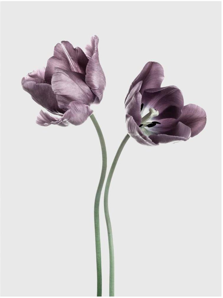 Plakat Tulipany 30 x 40 cm