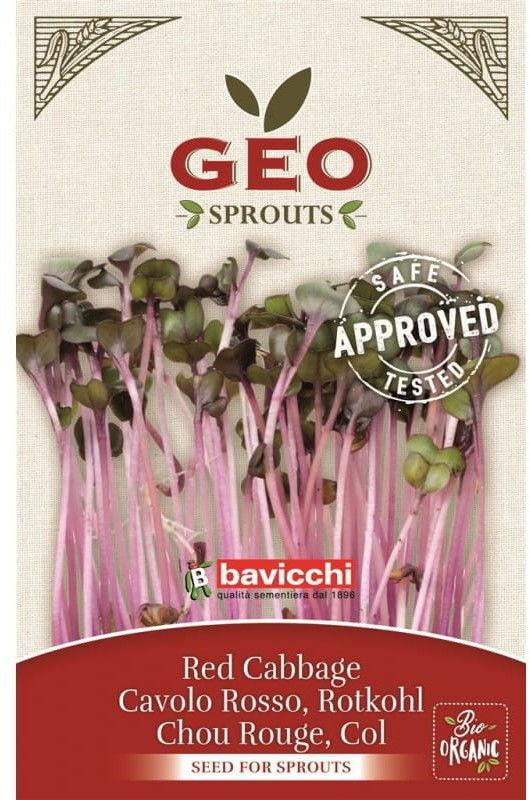 Czerwona kapusta - nasiona na kiełki GEO certyfikowane Bavicchi 12g