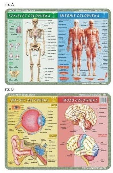 Podkładka edu. 055 - Szkielet, mięśnie, zmysły...