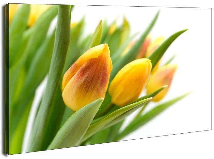 Żółte tulipany - obraz na płótnie wymiar do wyboru: 90x60 cm