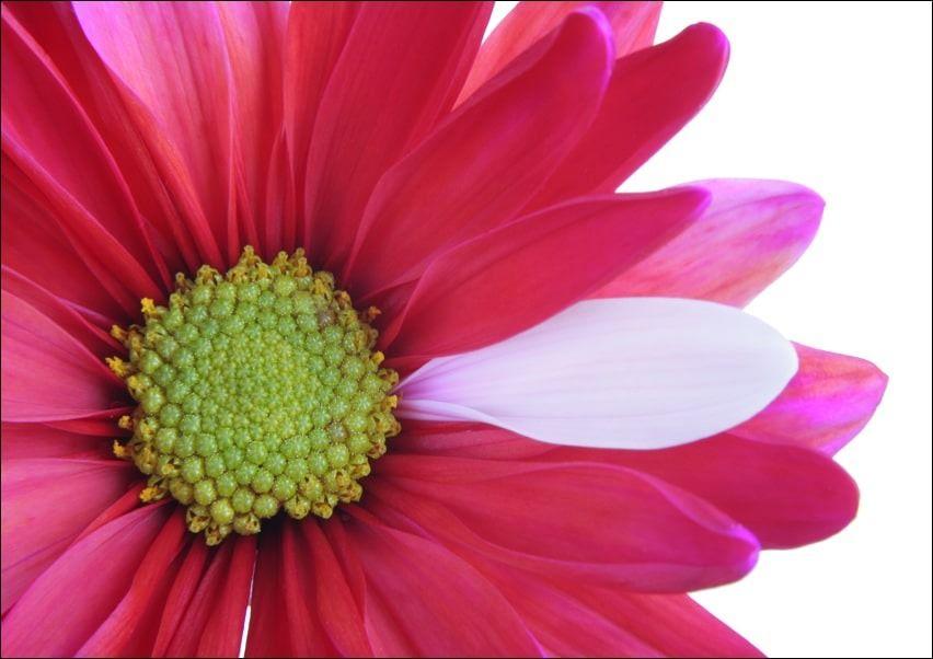 Kwiat - plakat wymiar do wyboru: 42x29,7 cm