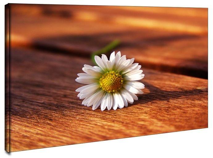 Stokrotka. kwiat - obraz na płótnie wymiar do wyboru: 100x70 cm