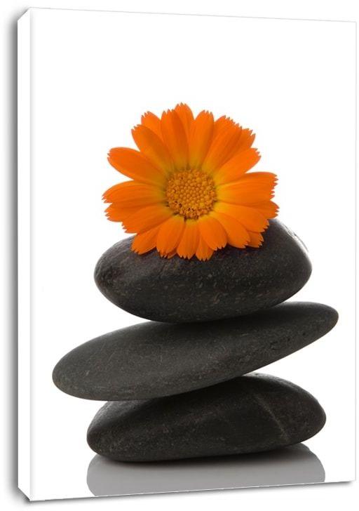 Spa, kamień i stokrotka - obraz na płótnie wymiar do wyboru: 60x80 cm