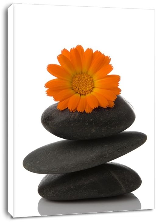 Spa, kamień i stokrotka - obraz na płótnie wymiar do wyboru: 70x100 cm