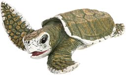 "Toob ""Safari Incredible Creatures Kemp ''s Ridley żółw morski (wielokolorowy)"