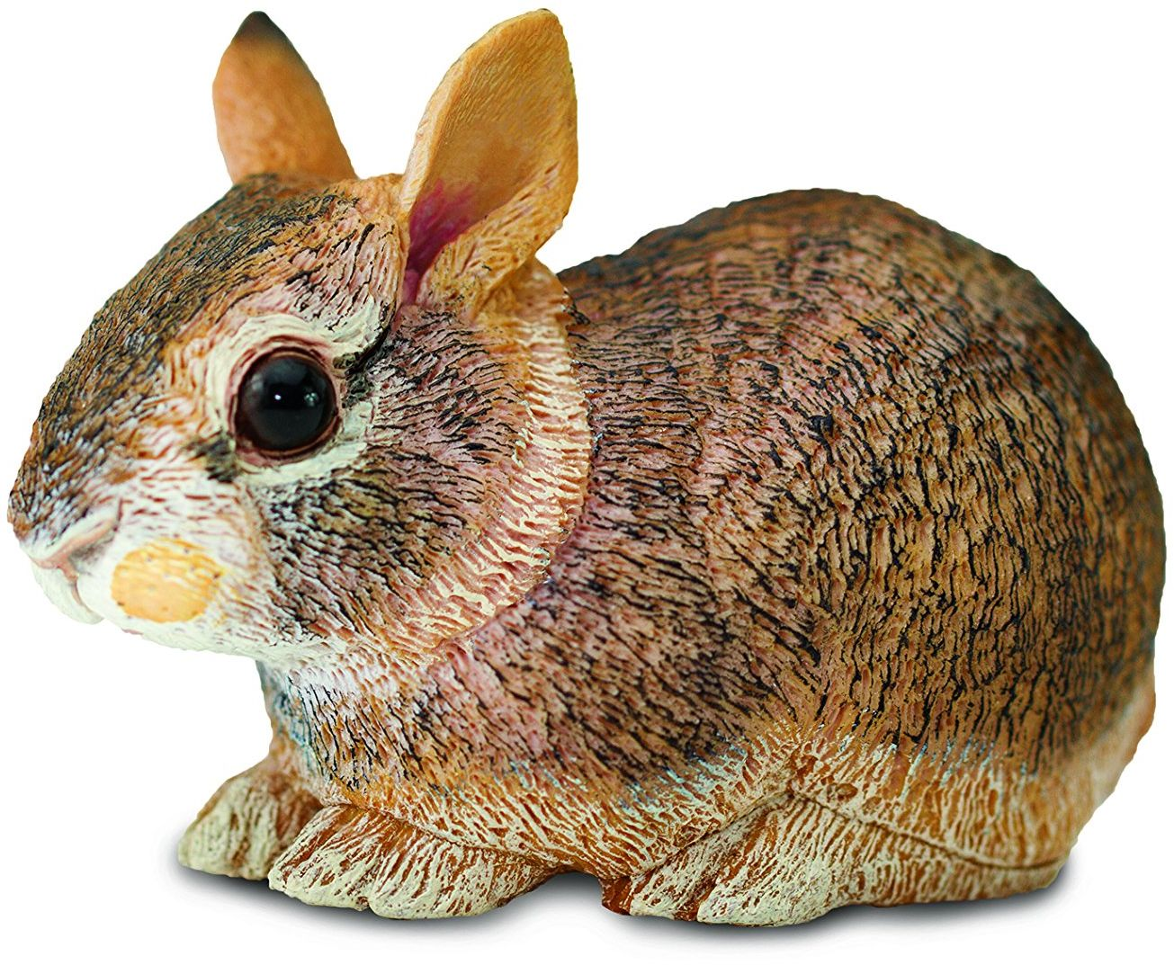 Eastern Cottontail królik dziecko