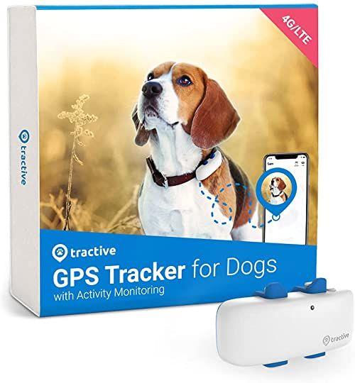 Tractive GPS dla psów (2021). Zalecany przez Martin Rütter. Zawsze wiesz, gdzie jest Twój pies. GPS i śledzenie aktywności