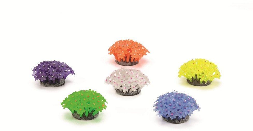 Rośliny posortowane mini