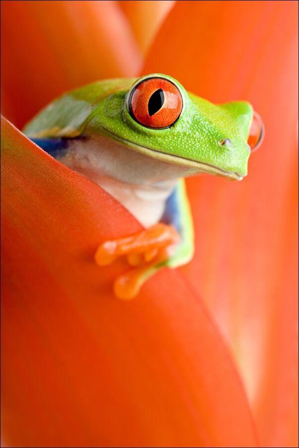 Żaba w kwiecie - plakat wymiar do wyboru: 40x50 cm