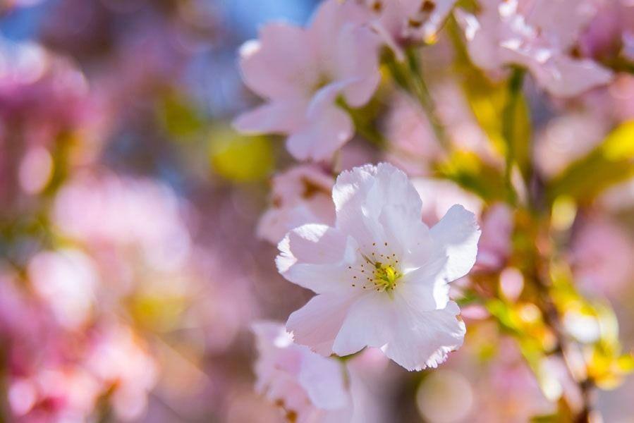 Wiosenne kwiaty - plakat premium wymiar do wyboru: 60x40 cm
