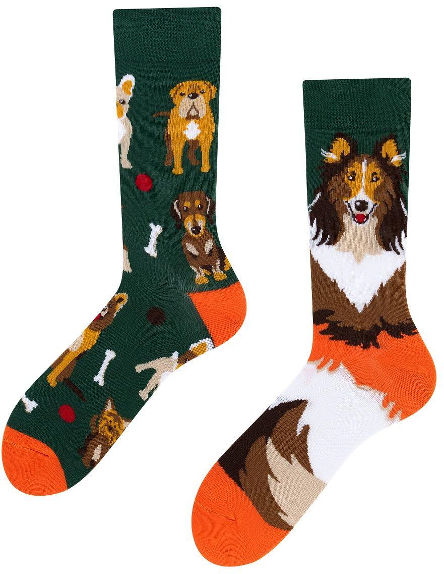 Dogs, Todo Socks, Pieski, Kości, Kolorowe Skarpetki