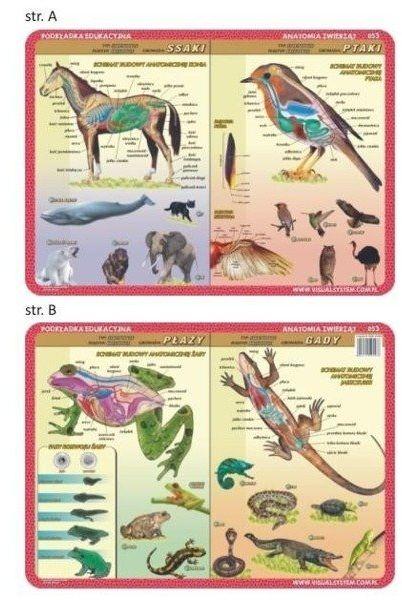 Podkładka edu. 053 - Anatomia: ssaki, ptaki, płazy