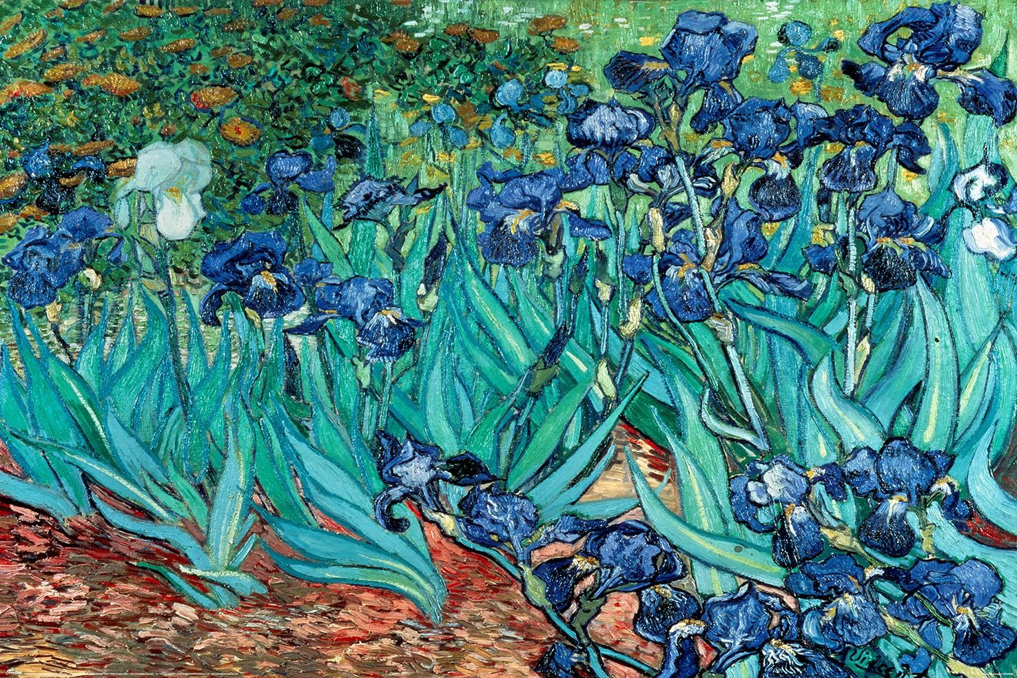 Vincent van gogh irysy - plakat