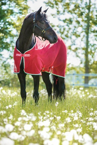 Derka siatkowa AMIGO Net Cooler - HORSEWARE - red/white