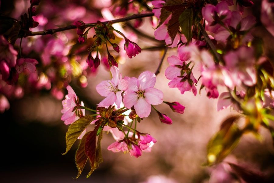 Wiosna w ogrodzie - plakat wymiar do wyboru: 70x50 cm
